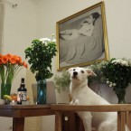 最近日本人を「飼い始めた」プラハ・ヴィノフラディの雌犬の小話。