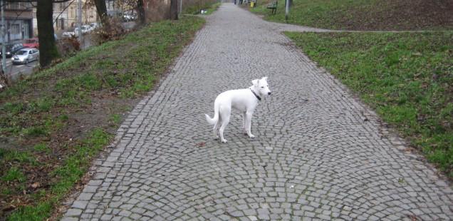 プラハにて犬に連れられて棒にあたる日々。